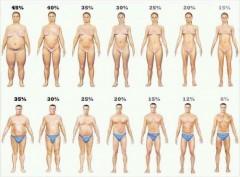 体脂肪率と身体のライン